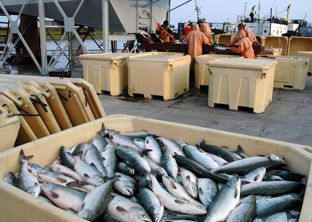 The supply of fish, clams and crustaceans is estimated at 3.43%