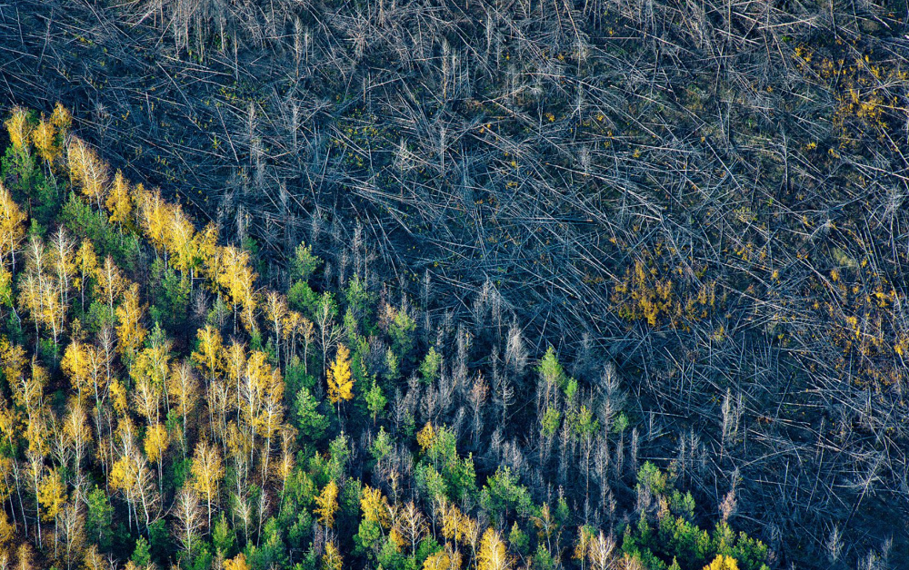 Deforestation, by Konstantin Tolokonnikov. Photo: Voronezh region