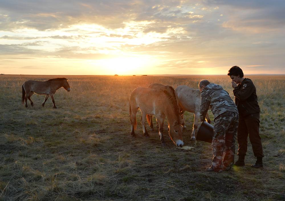 Russian President Vladimir Putin feeds Przewalski's horses in a reserve for wild horses near the Urals city of Orenburg, Russia, October 3