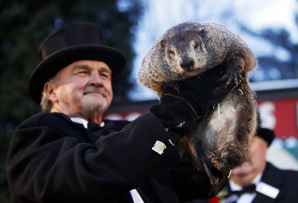 Groundhog Club co-handler raises Phil the weather prognosticating groundhog from his burrow during the Groundhog Day celebration at in Punxsutawney, USA. Phil saw his shadow and predicted six more weeks of winter