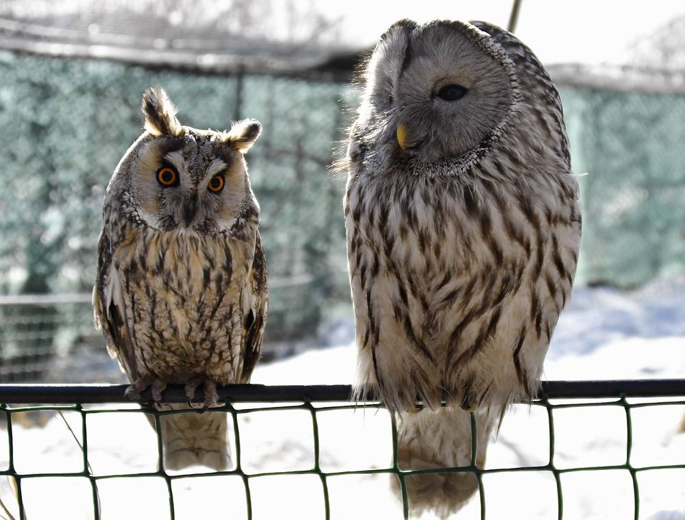 Owls in an aviary at the park