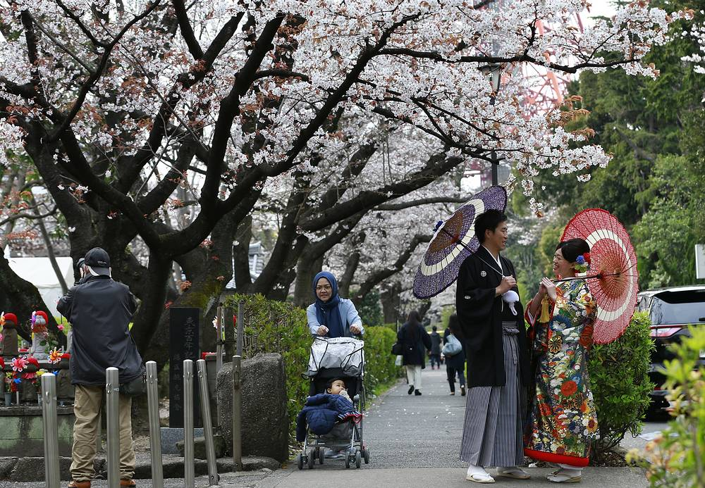 A couple wearing Japanese traditional wedding Kimonos pose for a wedding photo under budding cherry blossoms in Tokyo, Japan