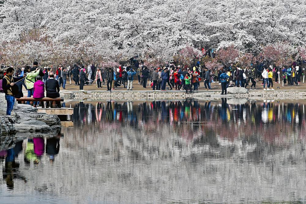 Visitors enjoy the cherry blossoms at the Yuyuantan Park during spring festival in Beijing, China
