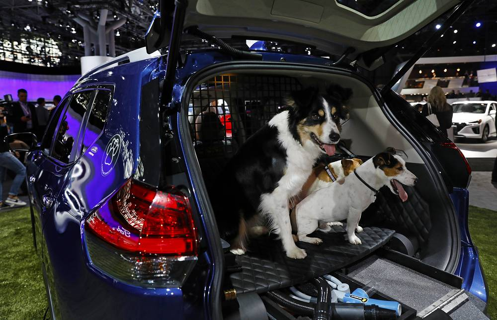 Dogs occupy the rear compartment of the Japanese Nissan Rogue Dogue SUV