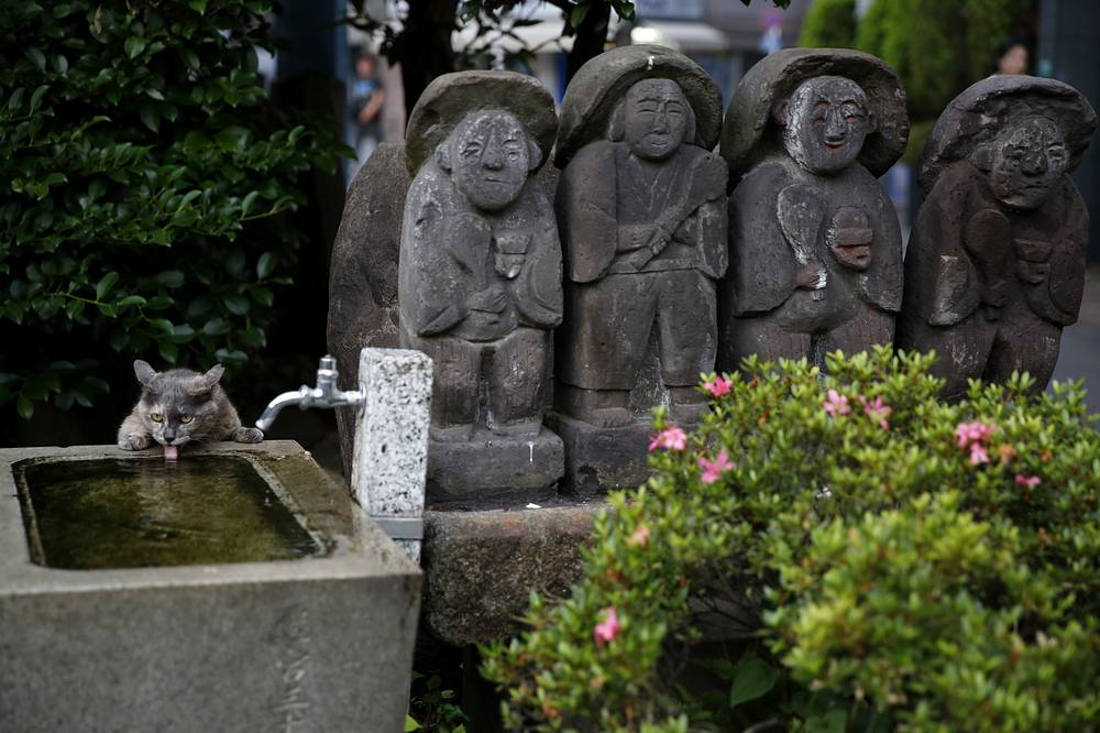 "A stray cat drinks water near a row of small statues of ""jizo,"" the guardian deity of children, at Ikebukuro Suitengu shrine in Tokyo, Japan, June 28"