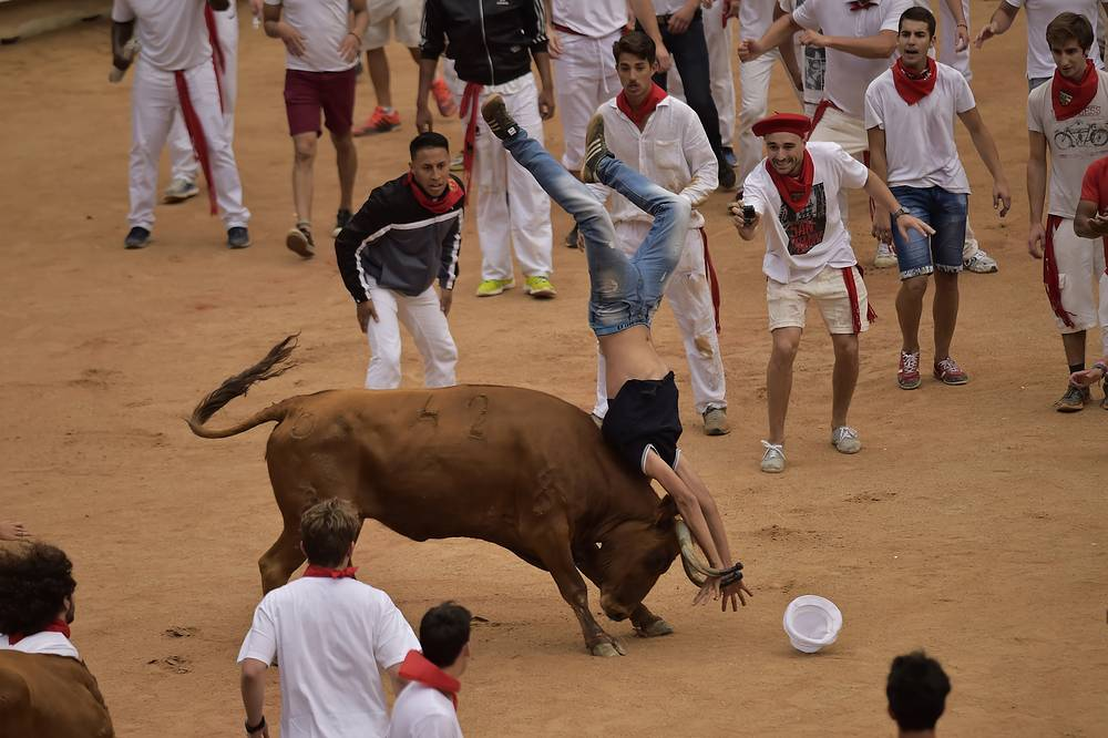 A reveller in upended by a calf after the third running of the bulls at the San Fermin Festival