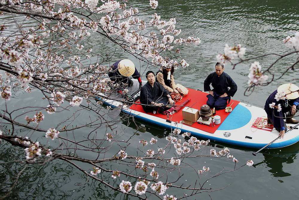 A couple on a boat admiring cheery blossoms as they enjoy a tea ceremony in a river in Yokohama, Japan