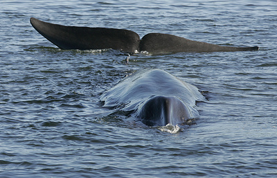 Whale rescued in Russia's Far East heading back out to sea — minister