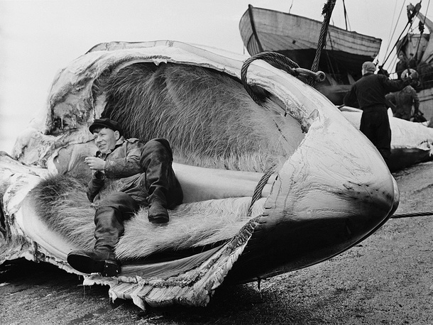 Whale fishery in Primorsky Territory, 1960