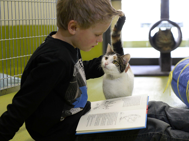 A child reading to a cat in the animal shelter in Netherlands