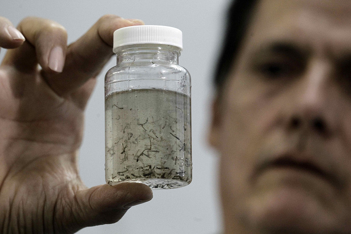 A doctor showing a jar with larvas of the mosquito Aedes Aegypti, that transmit the Zika virus, the Dengue and the Chikunguna, at a laboratory in San Jose, Costa Rica. Costa Rican Ministry of Health announced measures to intensify the surveilance to prevent a possible spread of the Zika virus to the country