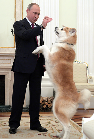 Russia's President Vladimir Putin with his Akita dog named Yume before giving an interview to Nippon TV and the Yomiuri Shimbun newspaper, at the Moscow Kremlin