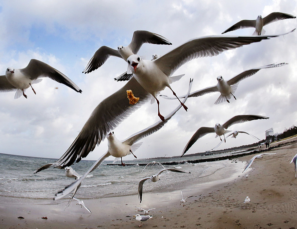 Sea gulls fly at the beach of the Baltic Sea in Timmendorfer Strand, Germany, December 27