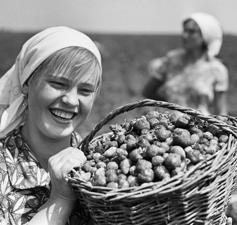 Collecting strawberries in Krasnodar region, 1968