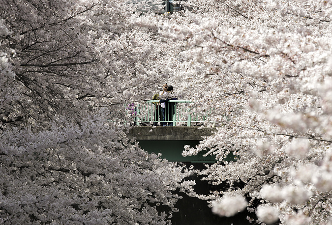 People take photos as they view cherry blossoms in full bloom in Tokyo, Japan