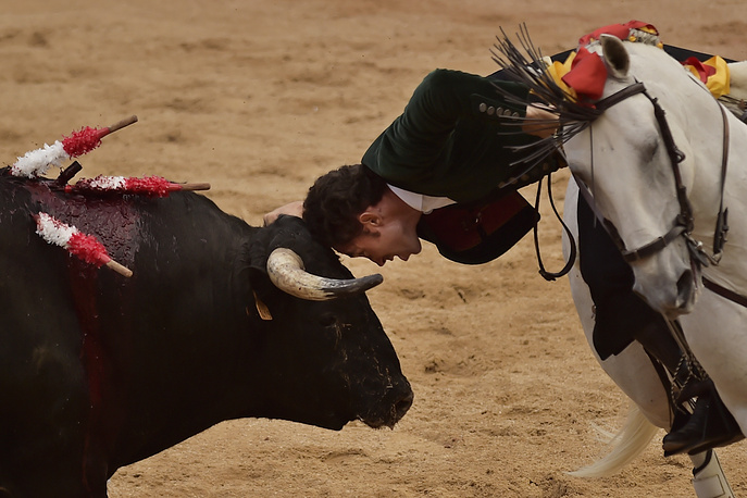 Bullfighter leans to touch a bull's head with his own during a bullfight on horseback at the San Fermin Festival in Pamplona