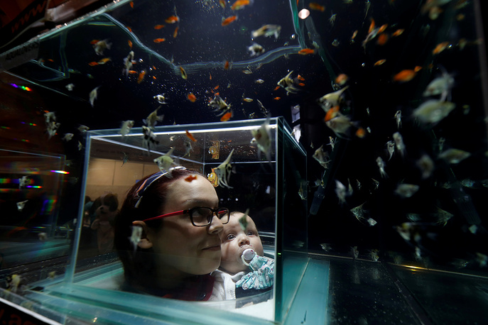 A woman and her son look at fish at the Pets Festival in Lisbon, Portugal, February 4