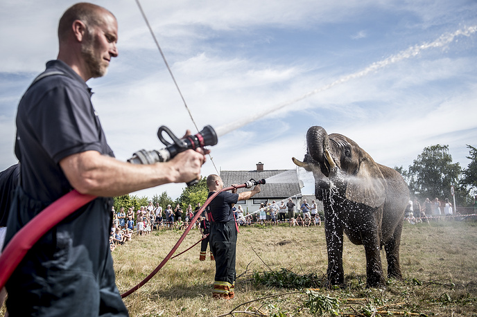 Local firefighters spread water on elephants of Cirkus Arene to cool them off in Gilleleje, Denmark