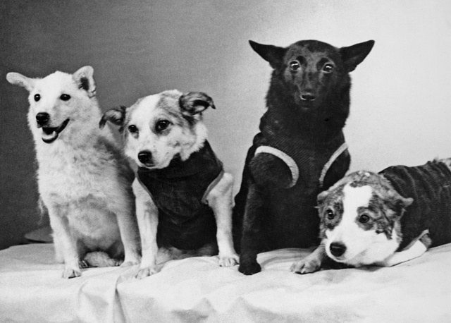 'Space' dogs Belka, Zvyozdochka, Chernushka and Strelka, 1961