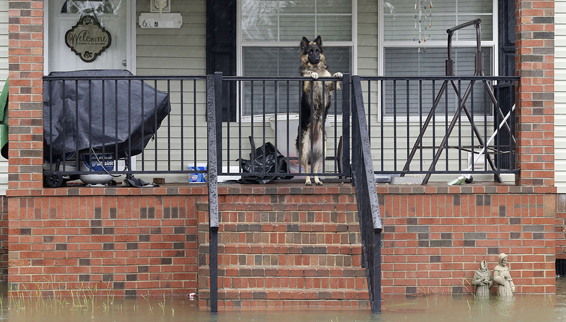 A dog left behind on a porch looks out from a flooded neighborhood in Lumberton, North Carolina