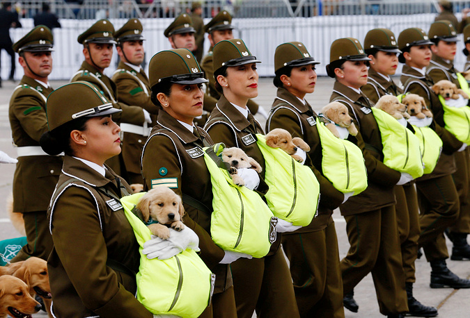 Chilean police officers march with future police dog puppies during the annual military parade at O'Higgins park in Santiago, Chile, September 19