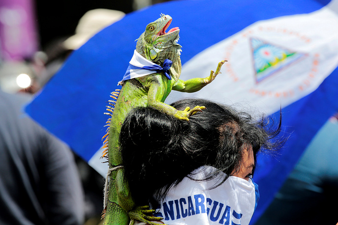 An anti-government protester carries an iguana on her head, as she takes part in a protest against Nicaraguan President Daniel Ortega's government in Managua, September 15