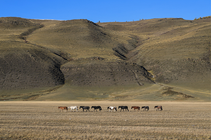 A herd of mountain horses