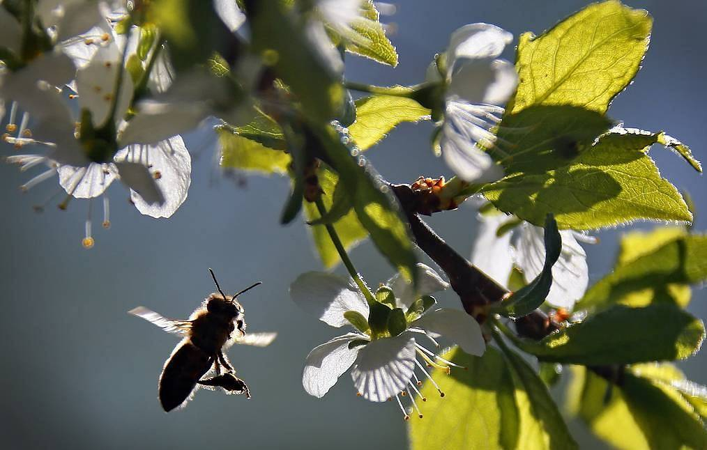 Spraying insecticides on fields causes death of 80,000 bee colonies in 25 Russian regions