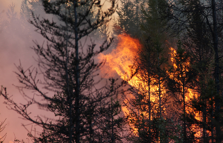 Forest fires rage in Armenian reserve